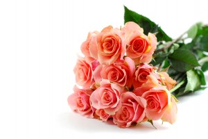 Bouquet of pink roses on white background