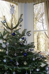 christmas trees 010